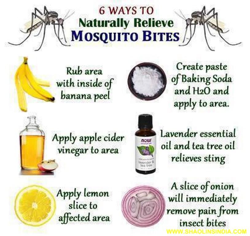mosquito relieve