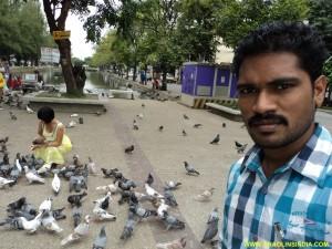 Martial arts Birds Area